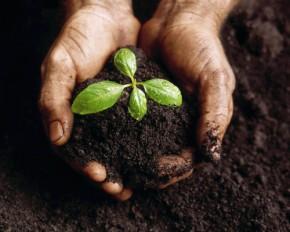 Becoming Good Soil