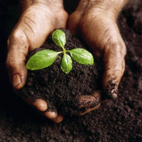 Becoming Good Soil